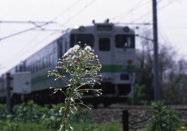Img95440